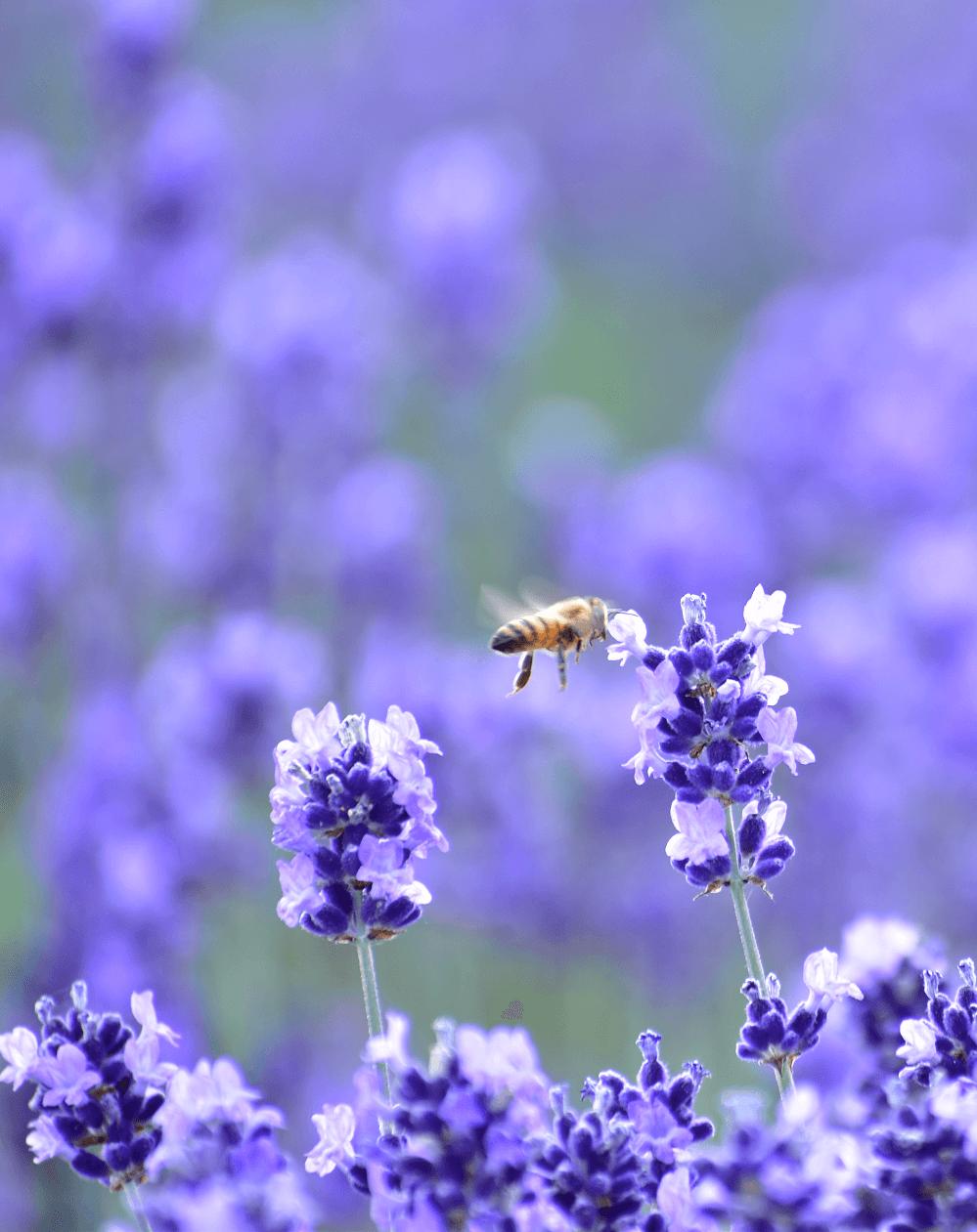 季節の美瑛の画像